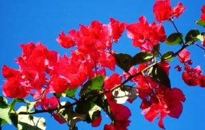 【莫桑比克图片】花开非洲(三):蝶恋花