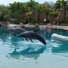 海豚湾攻略图片