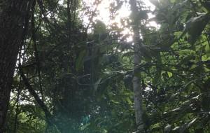 【伊瓜苏图片】巴西之行之美景篇