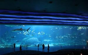 【珠海横琴长隆国际海洋度假区图片】珠海~长隆~慢慢游~陪你一起长大