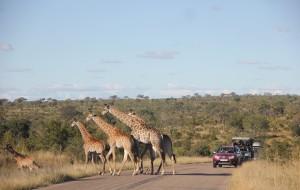 【克鲁格国家公园图片】如何预订并完美玩转南非克鲁格公园