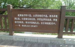 【大兴图片】寻鹿——在北京大兴南海子公园