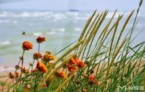 【北戴河图片】北戴河印象之三:走过那年的春夏秋冬