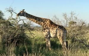 【克鲁格国家公园图片】南非克鲁格国家公园(Kruger National Park )三日游
