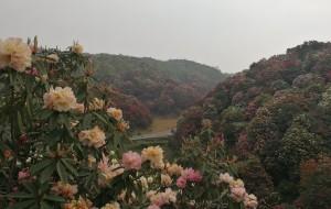 【黔西图片】贵州百里杜鹃最简约自助游攻略