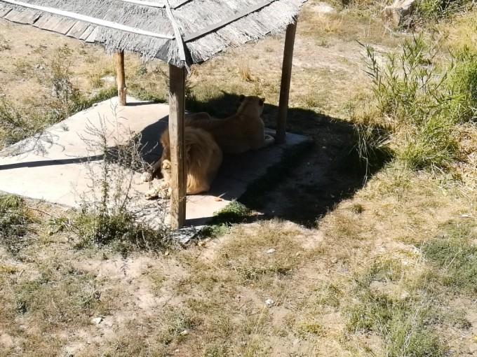 新疆乌鲁木齐天山野生动物园游记