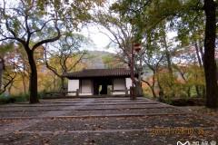 秋染红枫五彩—苏州天平山