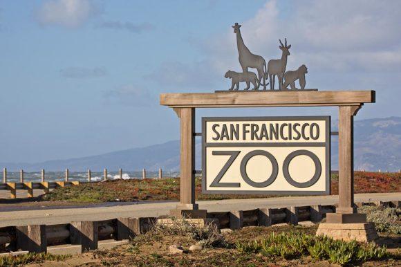 概述: 旧金山动物园紧靠太平洋,是座城市绿洲,拥有超过250个品种的1000多只动物,包括异国的、濒临灭绝的和被营救的动物,还有可爱的美丽花园,到处都是本地和国外植物。  产品详情: 魔幻的利安娜罗伯茨非洲区(Leanne Roberts African Region )和情人家族大草原(the Valentine Family Savanna)将带你领略这片物种丰富的土地,你会看到长颈鹿、斑马、非洲大羚羊、鸵鸟和鹳等动物。在赫斯特灰熊山谷(Hearst Grizzly Gulch),你可以和被拯救的灰熊