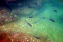 浮潜的海中。。。
