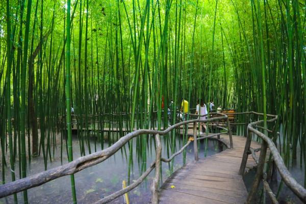 临沂 游记  继续往前走,便是这片超大的竹林,清风拂过,竹叶沙沙作响