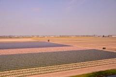 世界最美的春天 - 荷兰库肯霍夫赏郁金香