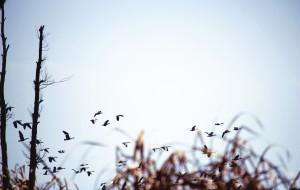 【威宁图片】2017年最后一天,到威宁草海去看鸟
