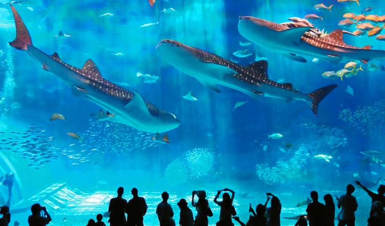 重庆欢乐海底世界门票 海洋水族科普馆(预订30分钟后生效)