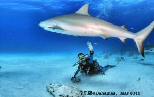【巴哈马图片】【我的赤足旅行】在巴哈马看鲨鱼