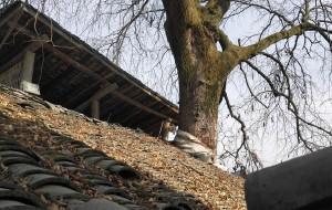 【石泉图片】后柳古镇