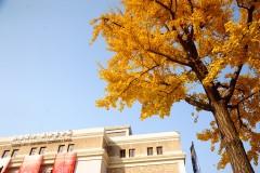 留住最后的秋色~上海街头走一走