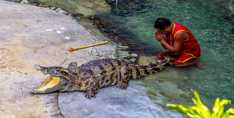 曼谷 北榄鳄鱼湖动物园 crocodile farm(体验泰国鳄鱼