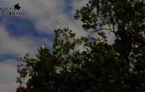 薄荷岛娱乐-薄荷岛萤火虫观赏之旅