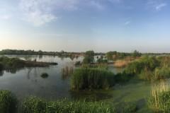 合肥滨湖湿地公园