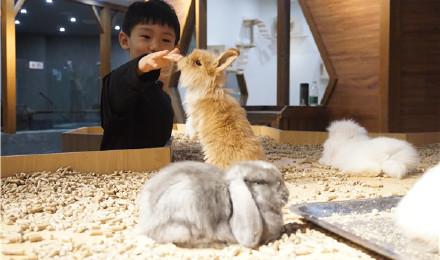 天津zoonly动物主题公园门票(当天可订 随订随进 家庭