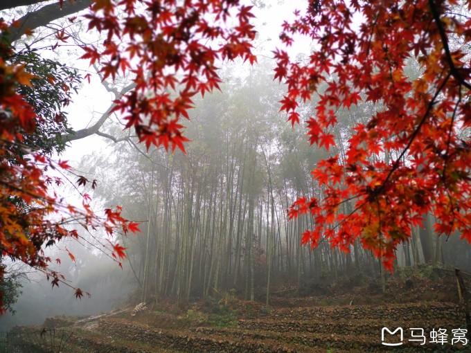 杭州西湖风景名胜区-九溪烟树