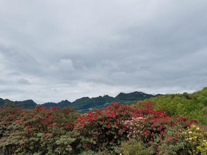 贵州张家界,湖南百里视频自驾游,武陵源v视频秩序-马攻略新杜鹃攻略图片