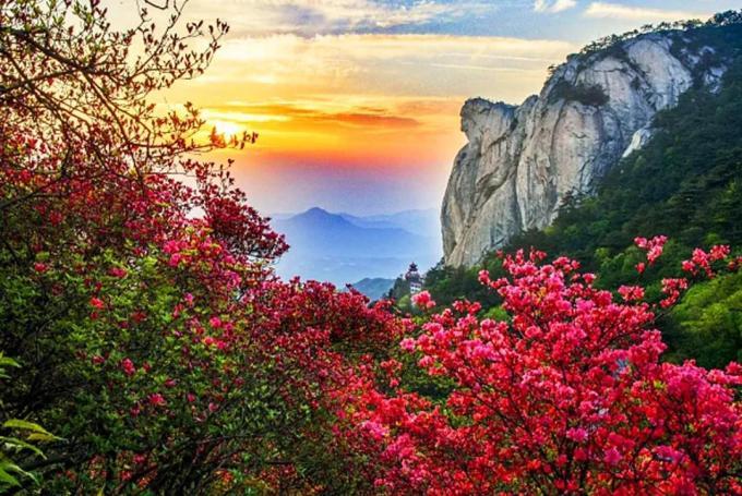 麻城杜鹃花,图片@中国旅游新闻网