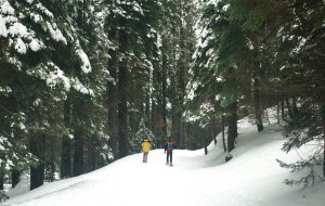 【优胜美地国家公园图片】冬游美国优胜美地yosemite国家公园