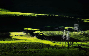 【扎尕那图片】陪你一起看草原(扎尕那)