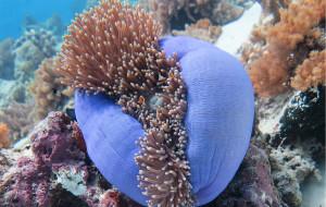 【诗巴丹图片】诗巴丹平台Seaventures潜水之旅