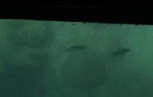 巴厘岛娱乐-南湾水上中心