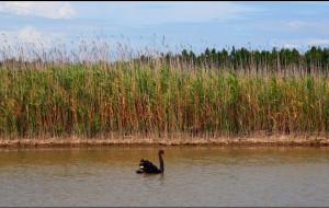 【崇明岛图片】上海周边游之崇明岛东滩湿地