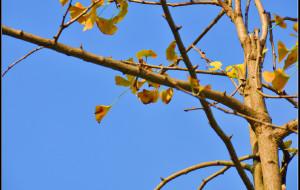 【南雄图片】秋天的童话----2012南雄帽子峰黄叶+野温泉