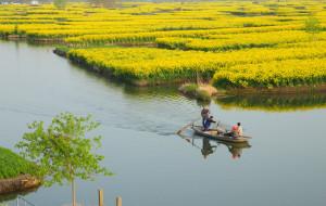 【泰州图片】花甲老人兴化看油菜花