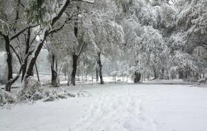 【长春图片】大雪纷飞,下个不停,长春,今年入冬第一场雪