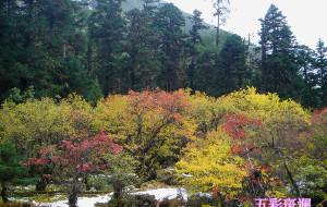 【毕棚沟图片】层林尽染毕棚沟,金秋赏叶正当时