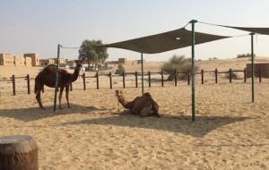 迪拜娱乐-Al Sahra Desert Resort