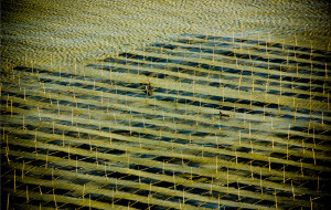 【霞浦图片】色之旅--水墨画般的霞浦&三坊七巷印象
