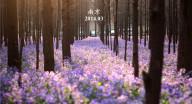 """南京多个景区""""五一""""有游园活动,市民游客同乐!"""