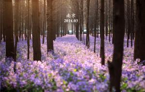 【南京图片】花季·普通青年和文艺青年同游南京