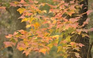 【从化图片】冬日里的秋意------广东从化石门公园