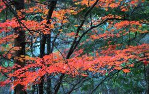 【延边图片】国庆自驾吉林长白山红叶小环线