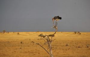 【肯尼亚图片】肯坦13天纯Safari行记,含旅行社推荐、塞伦盖蒂酒店分布及扒底裤报价超详尽攻略【精华】