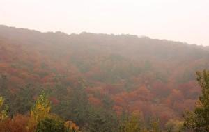 【莱州图片】莱州寒同山枫叶+小草沟银杏林