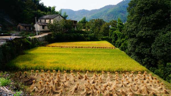 2013临安浙西大峡谷农家乐图片图片