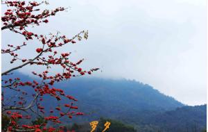 【昌江图片】二月,看那木棉花开