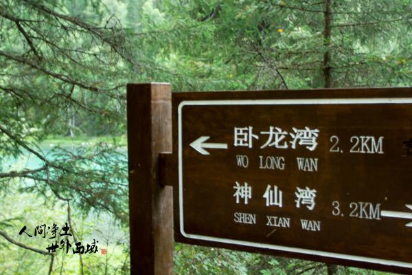 """这里人说,林子里的白桦树和松树往往长在一起,他们叫""""情人树"""",白桦树"""