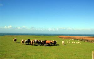 【特威泽尔图片】我在天堂的最南端——新西兰
