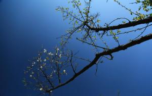 【永泰图片】万花吟风,素香似海----福州永泰赏梅图