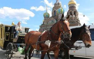【圣彼得堡图片】俄罗斯游之...圣彼得堡滴血教堂风景区随拍